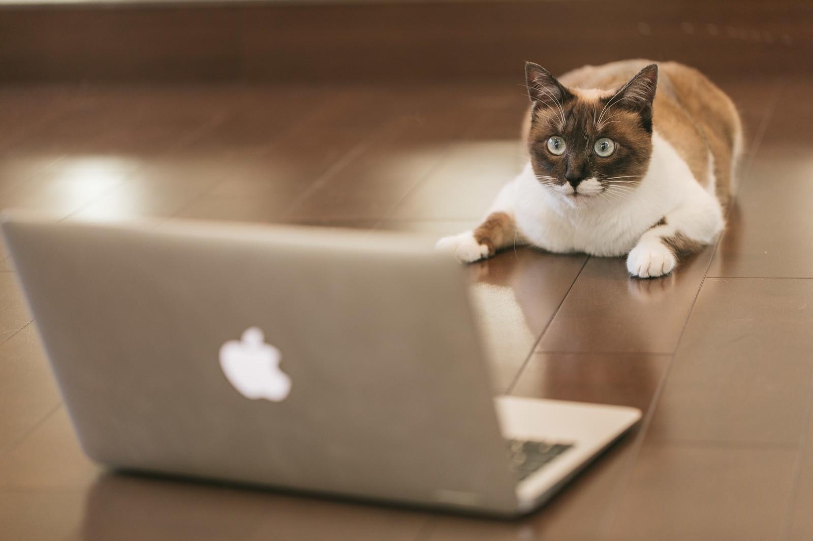 投資失敗・FX・溶ける・ネコ・猫