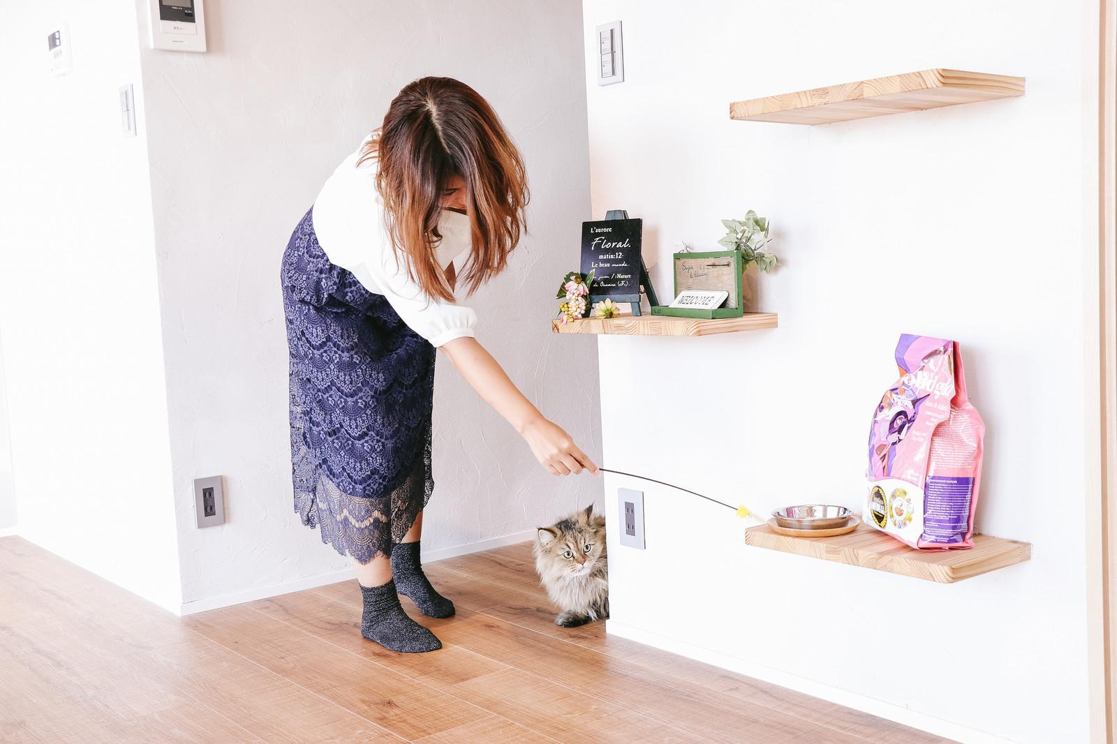 東京猫不動産・ネコ・マイホ―ム
